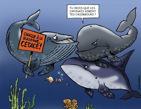 Baleines JAPON